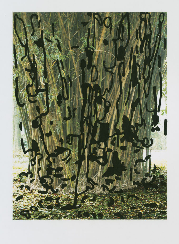 """Barbara Foster """"Bambusa Vulgaris"""" Taiwanese U.V. print and Sumi ink stencil on Awagami Kozo thick paper 32"""" x 26"""" 2014"""